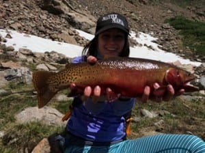 This pregnant Cutthroat Trout became a new Colorado state record.
